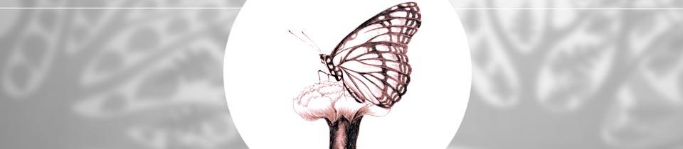 Farfalla – Camera Comfort